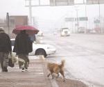Repunta influenza en temporada invernal