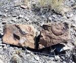 Descubren fósil de hidrosaurio de 70 millones de años
