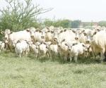 Pierden ganaderos 400 mil animales en todo el estado
