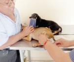 Demandan vacunar a mascotas