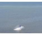 Salvan a piloto de avión que se desplomó en el mar