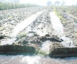 Beneplácito por lluvias en sector agropecuario