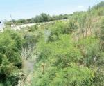 Invade maleza drenes y canales