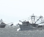 Colapsa flota camaronera