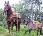 Ofrecen tacos y gorditas de caballo en la capital