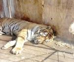 Existe reglamento para comercializar y exhibir animales y fue violado en parque
