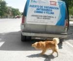 Exhortan a vacunar mascotas