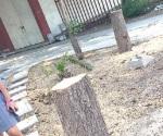 Talan  árboles en día mundial
