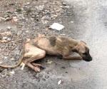 Animales de la calle los más abandonados durante aguaceros
