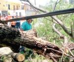 Retira municipio ramas y cacharros de la vía pública