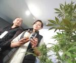 Plantean despenalizar posesión de drogas sin fines de venta