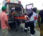 Ataca cocodrilo a un hombre en Madero