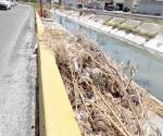 Abandonan ramas y basura a orilla del Dren de las Mujeres