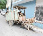 Actos de crueldad animal pueden ser sancionados severamente