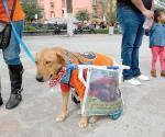 Piden aplicar ley contra quienes maltraten a sus mascotas