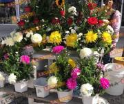 Llevan hoy mañanitas a la Virgen de Guadalupe en Reynosa
