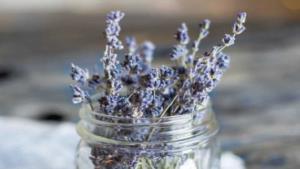 Plantas que puedes poner dentro de tu hogar para mejorar tu salud, bienestar