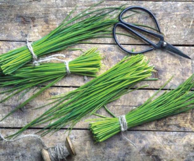Hierbas frescas y aromáticas imprescindibles para la cocina