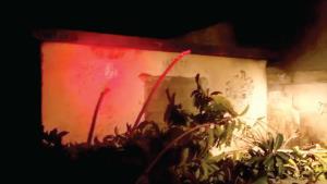 Prenden vagos fuego a vivienda