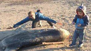 Un extraño y gigantesco pez apareció en una playa