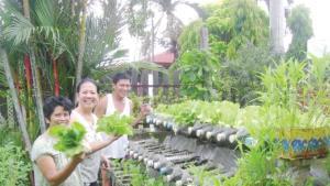 Alimentos que puedes cultivar por ti mismo en casa usando botellas de plástico recicladas