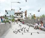 Aprovechan descanso para alimentar palomas