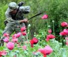 Controla Cártel de Sinaloa producción de heroína