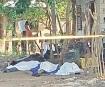 Dejan enfrentamientos 10 muertos en Sinaloa