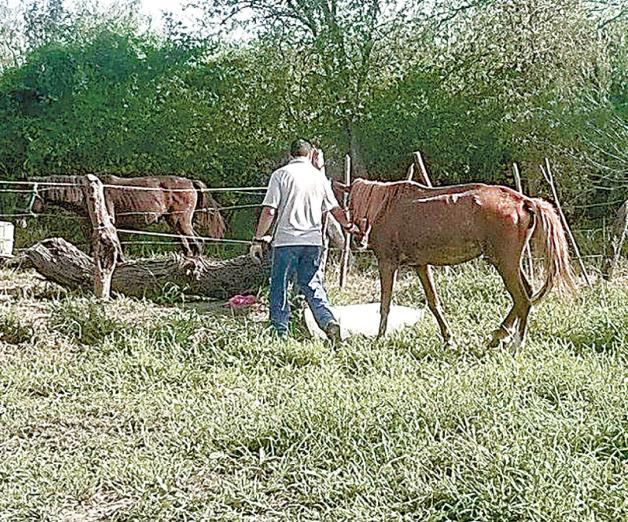 Se roban caballos de los carretoneros