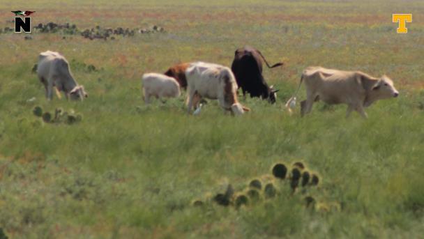 Desaprueban la carne de equino