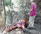 Mutilan vivo a un caballo