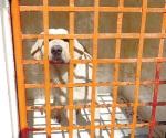 Vacunan mascotas contra la rabia