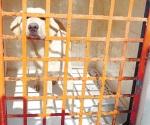 Vacunan 40 mil mascotas en el presente año