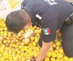 Encuentran mariguana bajo naranjas en una camioneta