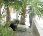 Movilizan a policía par de conejos