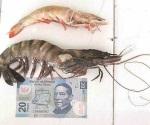 Capturan camarón de inusual tamaño