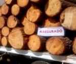 México impide ingreso de madera con plaga de EUA