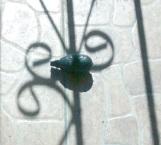 Terror por granada de juguete