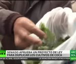 El Senado de Bolivia aprueba la ley para duplicar los cultivos de coca