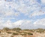 Ataca enjambre de abejas