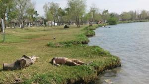 'Pesca' la muerte en el río Bravo