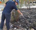 Detonan balas tiradas en terreno incendiado
