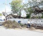 Podan árboles y retiran basura