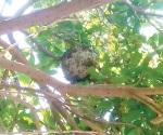 Elimina PC enjambre de abejas en escuela