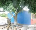 Derriban enjambre para salvaguardar escolapios