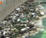 Reiteran llamado a no tirar basura