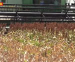 Esperan productores definir precios de granos con Sagarpa