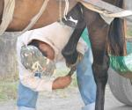 Deben aplicar reglamento de control animal