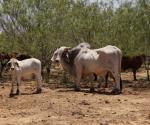 Faltan más lluvias para el sector ganadero