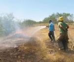 Bomberos combaten incendio de pastizal